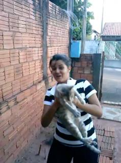 写真嫌いな猫