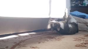 上下逆で移動する猫