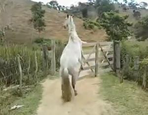 自分でゲートを開ける賢い馬