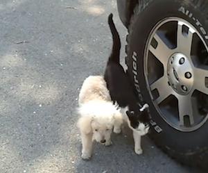 盲目の犬の行く手を補助する猫