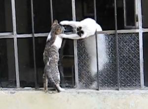 子猫の脱出を助ける母猫