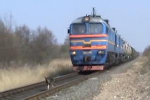 迫り来る電車の前を走る犬