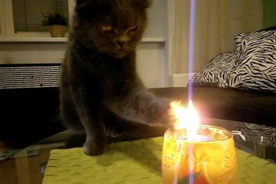 蝋燭が気になる猫