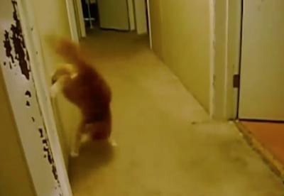 格好良すぎるパルクール技を決める猫