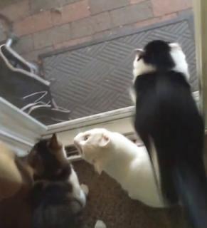 網戸に気付かなかった猫