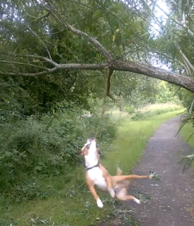 木の枝が大好きすぎる犬