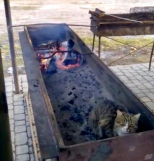 火のすぐ側で暖をとる猫