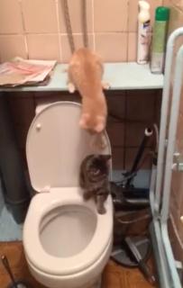 仲間の猫をトイレに落とす猫