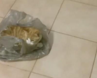 ビニール袋が大好きな猫