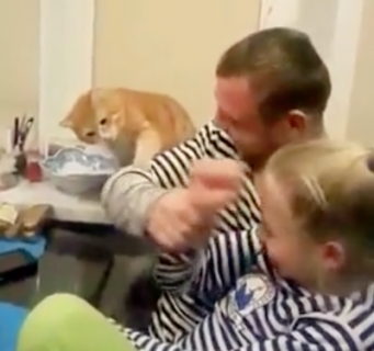 虐められているフリをする女の子を助けようとする猫
