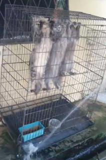 お掃除に協力する賢い猫