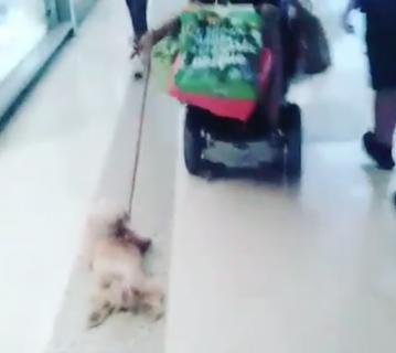 楽して散歩がしたい犬