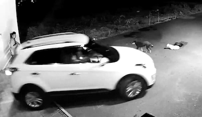 車にひかれかけた犬