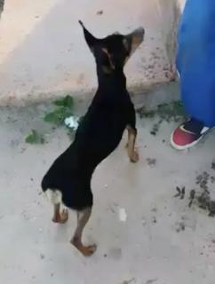 食べ物を隠す犬