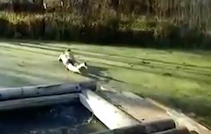 凍った池にダイブして体を強打する男