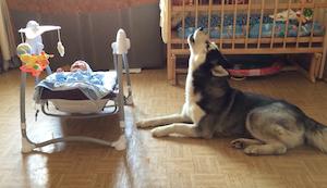 子守りをする犬