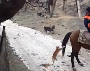 馬に乗りたかった猫