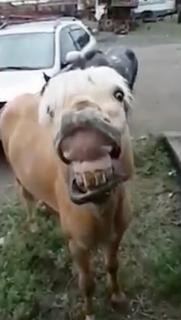 タバコが原因?後ろ蹴りで車を破壊する馬
