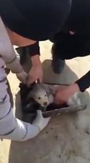 パイプに挟まった子犬を救助