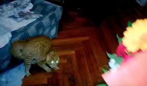 花が怖い猫