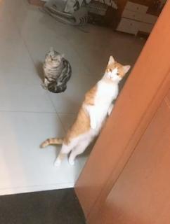 不思議な音に立ち上がる猫