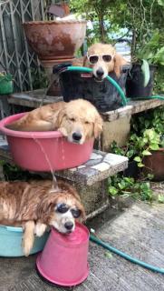 効率的なクーリングオフをする犬