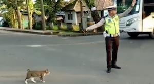 猫に優しい警官