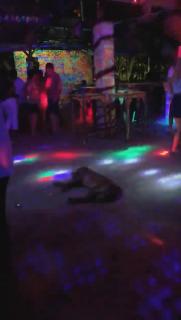 パーティーに乗り気じゃない犬