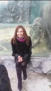 動物園の虎にガラス越しに襲われる女性