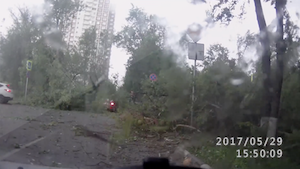 強風で木々が倒れる瞬間