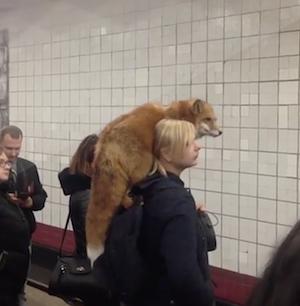 狐を連れて電車に乗る女性