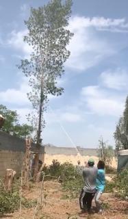 何か間違ってる木の切り倒し方法