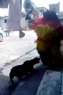 犬が怖くて踊っている場合じゃない人たち