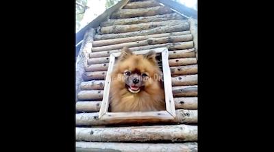 鳥小屋がジャストフィットだった小犬