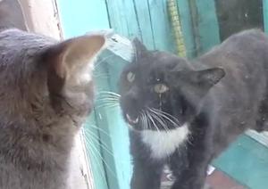 ガラス越しに戦う猫