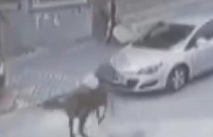 暴走する馬が車のフロントガラスを破壊