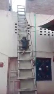 超高速で梯子を降りる子供