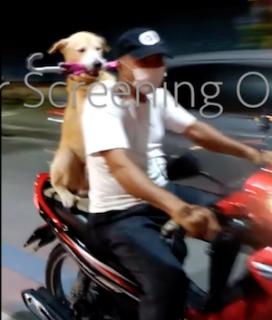 バイクの後ろが好きな犬