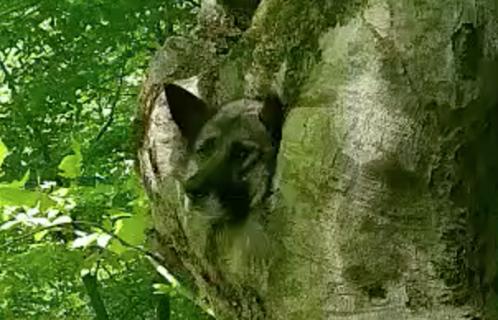 木の穴から出られなくなった犬を救助