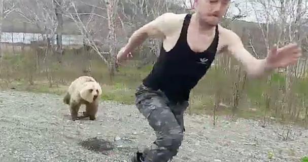 熊に背中を見せては行けない理由