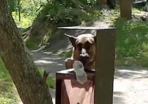 環境に優しい賢すぎる犬