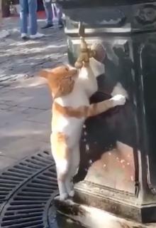水道から水を飲む猫