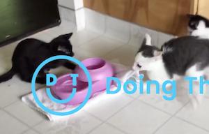 水の独り占めに失敗した猫