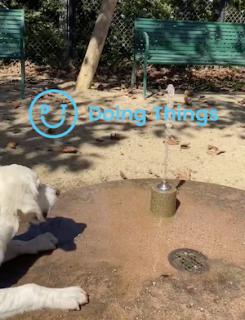 水が飲みたいけど飲めない犬