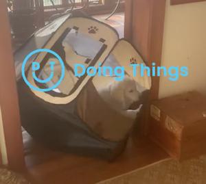 ペットサークルごと移動する犬
