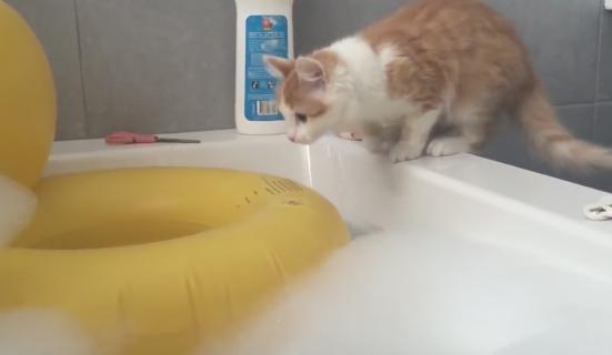 自らお風呂に飛び込んで後悔する猫