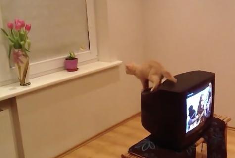 ジャンプ力が足りなかった猫