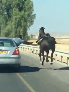 路上で馬の訓練