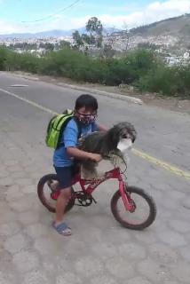 犬にもマスクをつけてあげる優しい少年