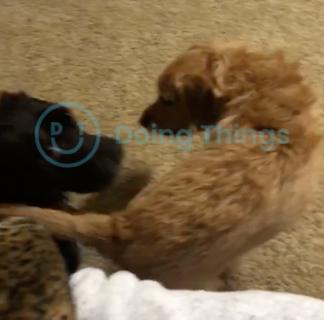 お尻で攻撃する犬